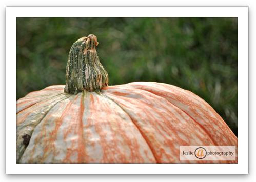 Rotund Pumpkin